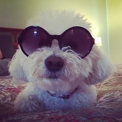 #dog #puppy #cute