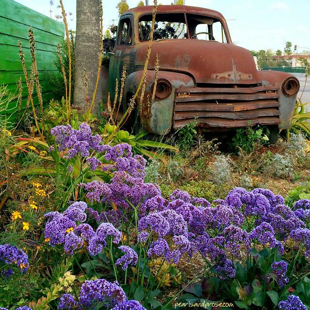 pickup_lavender_web