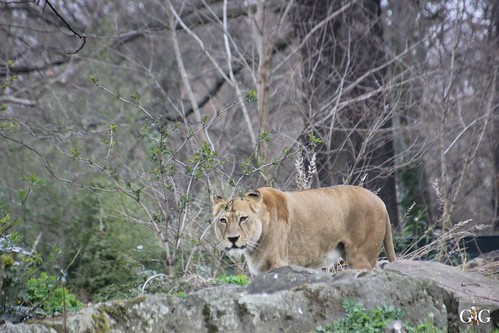 Oster-Montag im Zoo Berlin 06.04.201537