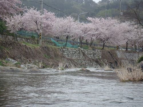 Spring in Gijang County