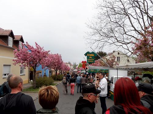 Blühende Bäume und Verkaufsstände - 136. Baumblütenfest Werder 2015