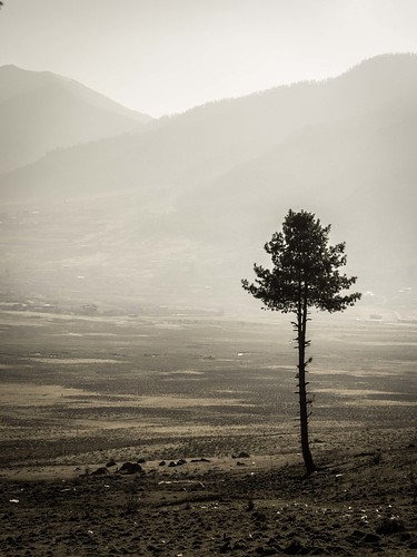 tree nature pine sepia outdoors mono march countryside asia southeastasia bhutan faded views vista himalaya phototrip muted onetree 2015 himalayankingdoms microfourthirds alisonryde olympusem1 phobjhikhavalley bhutanesekingdom bhutanbeauty countryofbhutan