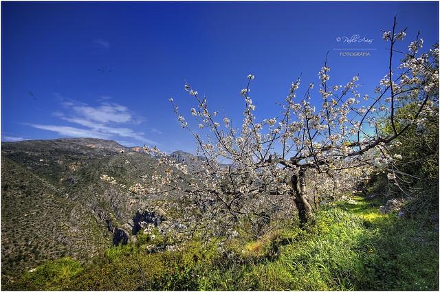 (087/15) Primavera en el Barranc de l´Infern (Vall de L'Aguar)