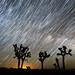 Milky Way Rising Behind Joshua Trees by Jeffrey Sullivan
