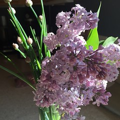 Fresh cut lilacs and chives from my garden! #Maine #spring :heart:️