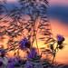 #Sunset by Rakel Rivera Hernando