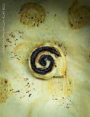 cocoa snail