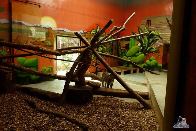 Zoo Bratislava 18.04.2015 25