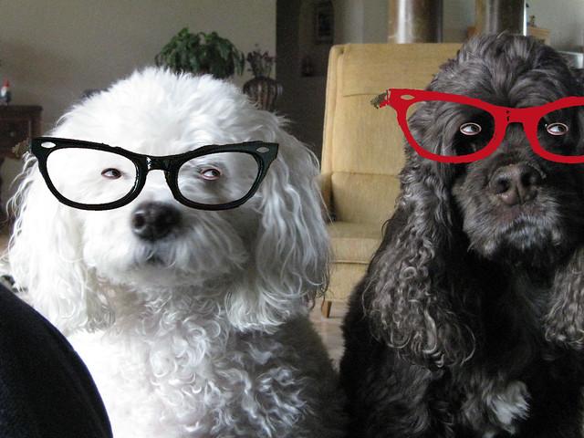 Cat Eyed Dogs - Pet montaaju time