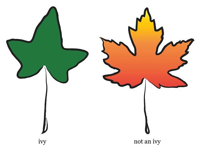 ivy/not an ivy