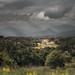 Tuscan Light by Dr Ewan