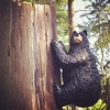 Our very own black bear sighting while #geocaching