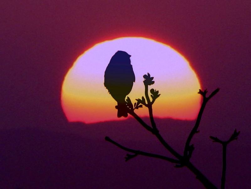 Fotomuse Bird
