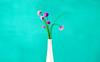 Schnittlauchblüte in Vase