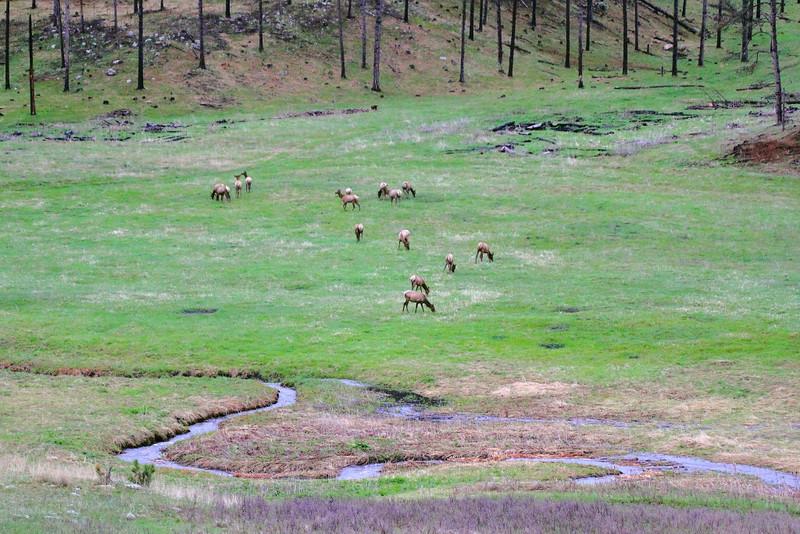 IMG_0282 Elk