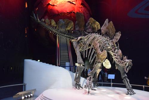 "Stegosaurus stenops (""Sophie"")"