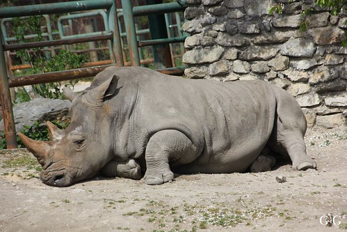 Zoo Bratislava 18.04.201540