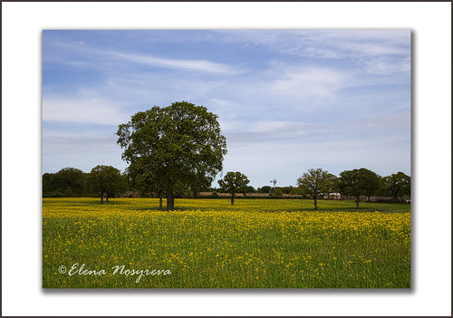 flowers trees sky green nature yellow landscape spring texas farm farmland bloom wildflowers hillcountry