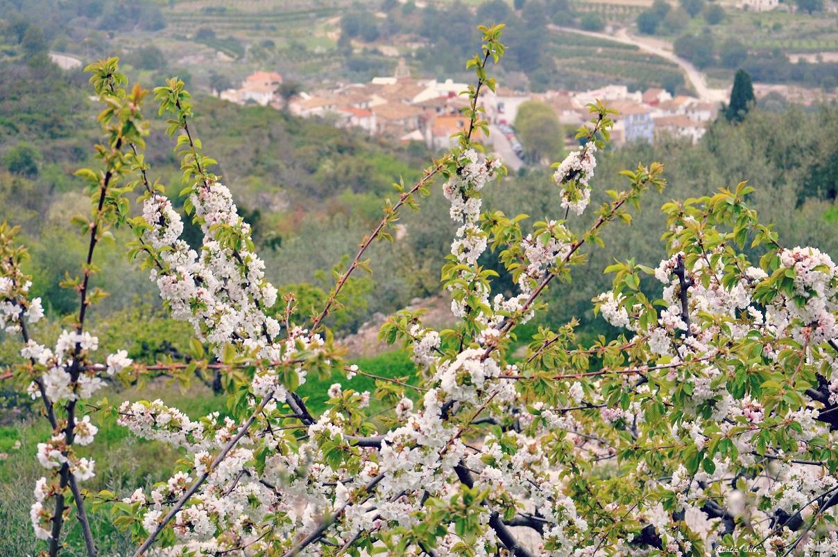 Valle de la Gallinera_Cerezos en Flor (11)