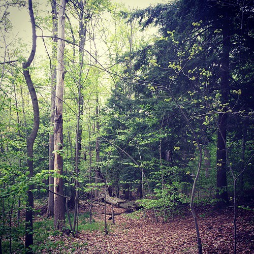 Chestnut Ridge forest. #ChestnutRidge #wny
