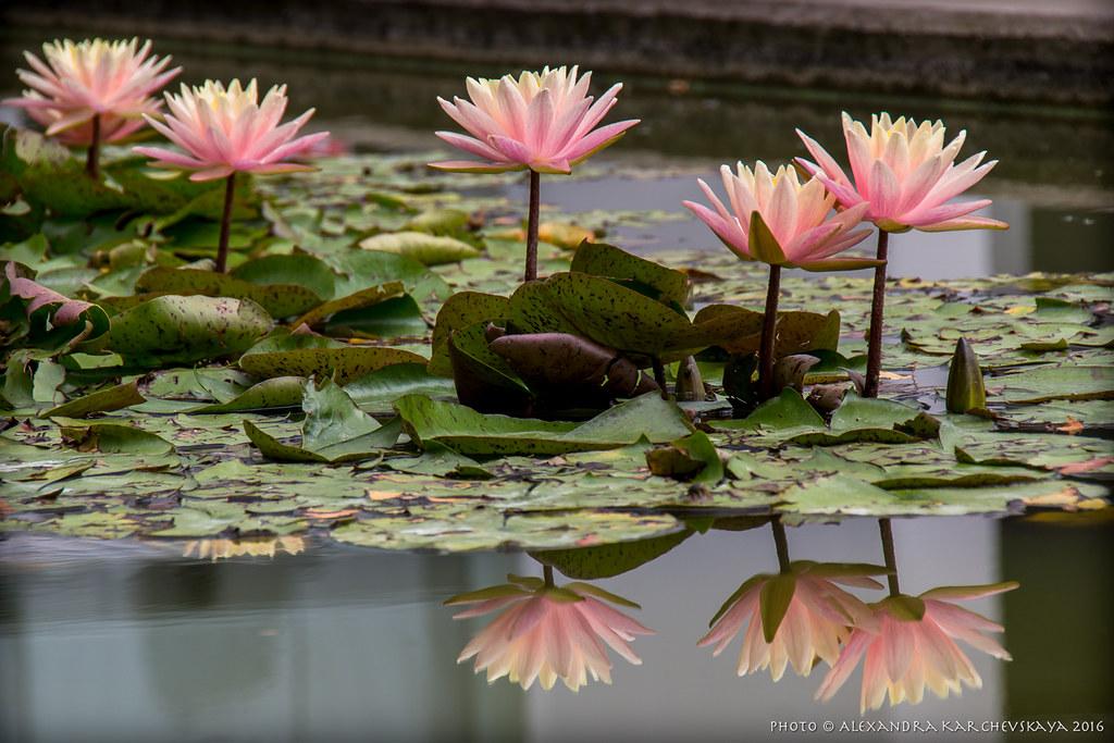 SpottingHistory.com - photo by a-kappa
