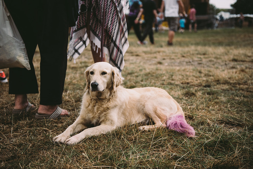 Standon Calling: Dogs