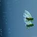 planthopper by AfricanViolet.co.uk