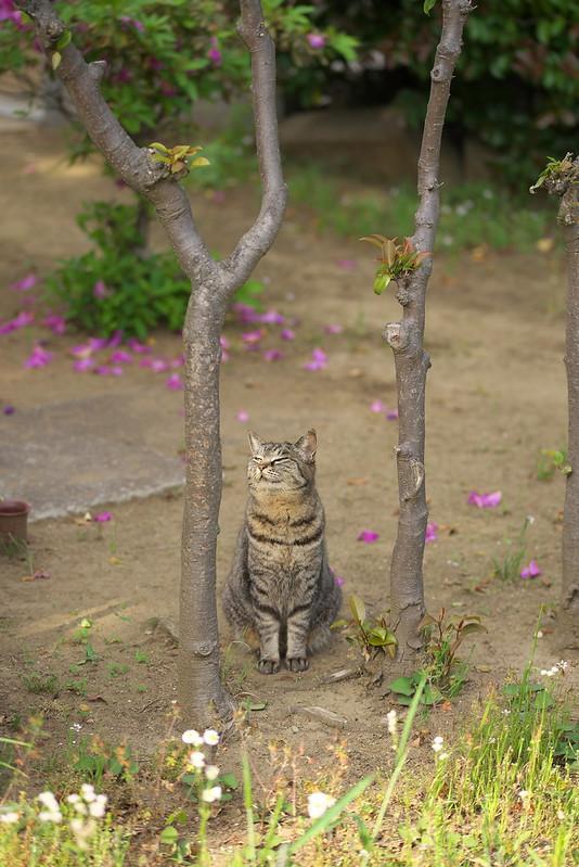 東京路地裏散歩 谷中のネコ 2015年5月10日
