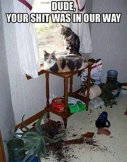 Two funny cats that made a big mess in the house!