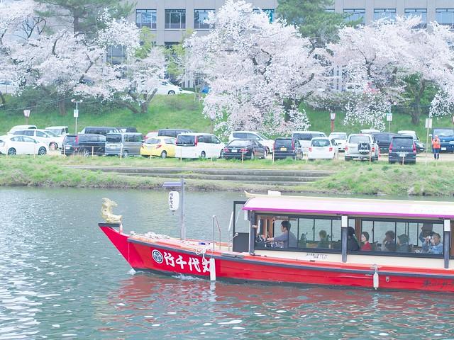 150404_Sakura_and_ 3