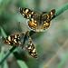 Butterfly Love by Karen McQuilkin