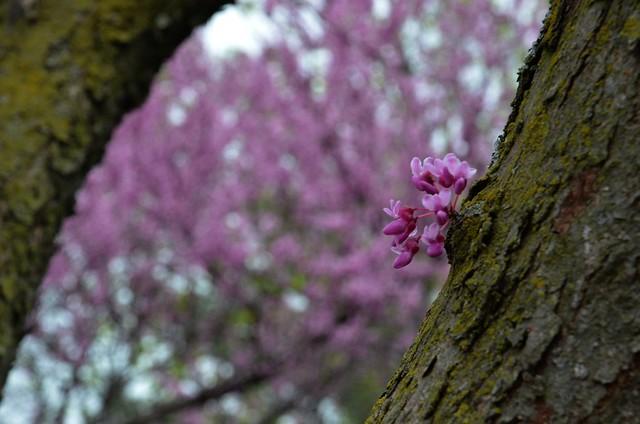 Mizumoto japanese stroll garden by adventurer dustin holmes Mizumoto japanese stroll garden