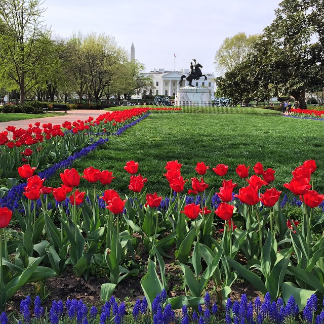 It's tulip mania at the White House #IGDC