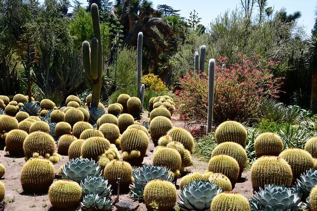 Desert Garden, catus