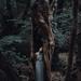 Dark Woods by Alessio Albi
