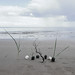 ikebana by the sea .... seakebana? by wild goose chase