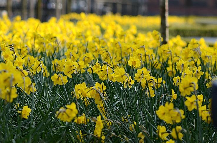 DSC_7087 Floral Amsterdam