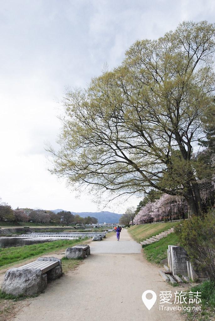 京都赏樱景点 半木之道 12