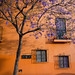 The Jacaranda in Bloom by Maria Sciandra