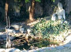 Backyard koi pond with Kwan Seum Bosal statue