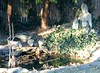 Backyard koi pond with Kwan Seum Bosal statue