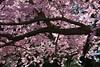 Spring at Winterthur Estate