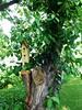 HTMT - Tree-Mendous Tuesday