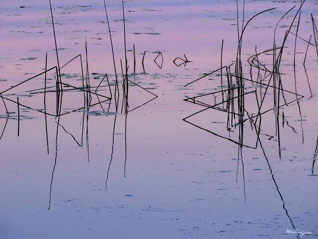 Reed graphics - Graphiques de roseaux