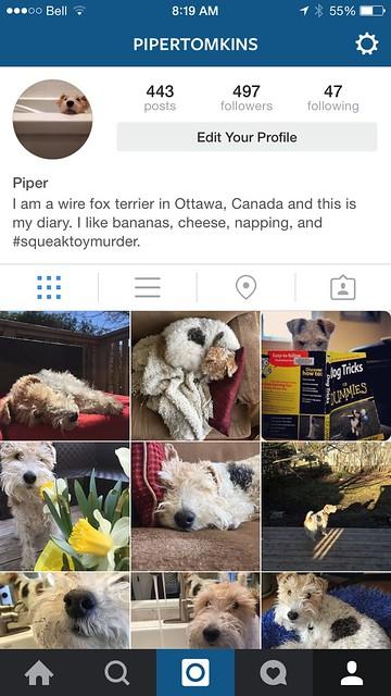 Piper on Instagram
