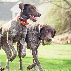 Pointer pals. :paw_prints:
