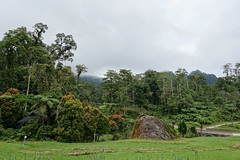 Borneo Highlands Cloud Forest