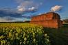 """""""fields in spring"""""""