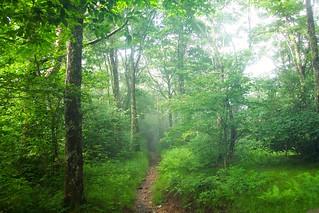 Appalachian Trail-Tenn-NC 17