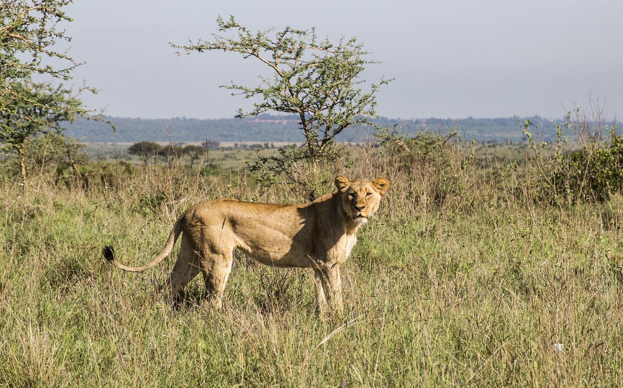 South B Nairobi